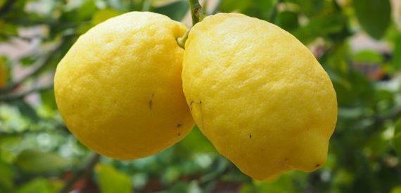 prodotti tipici procida limoncello